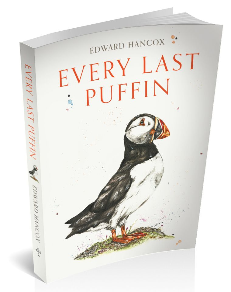 3d cover for every last puffin by Edward Hancox